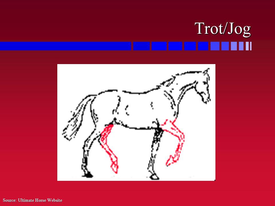 Trot/Jog