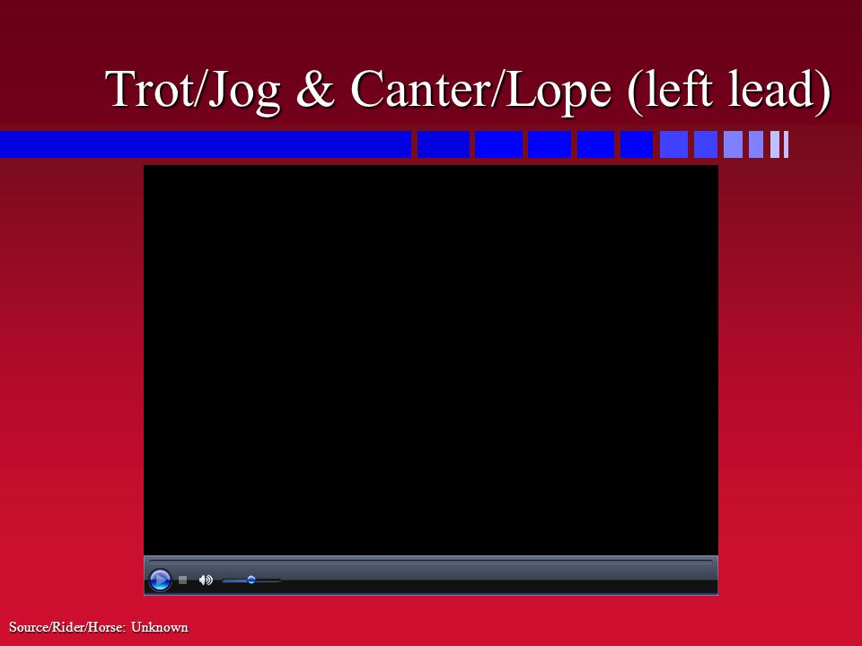 Trot/Jog & Canter/Lope (left lead) Source/Rider/Horse: Unknown