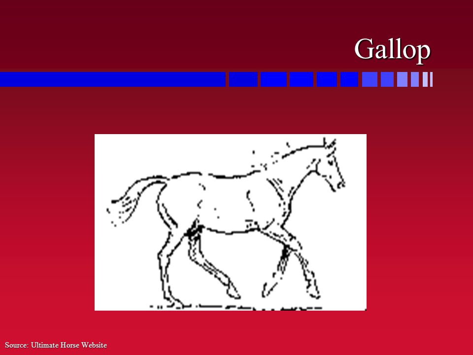 Gallop Source: Ultimate Horse Website