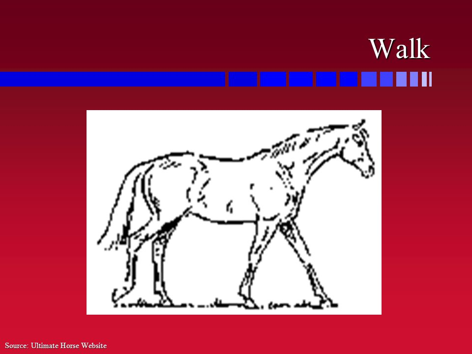 Walk Source: Ultimate Horse Website