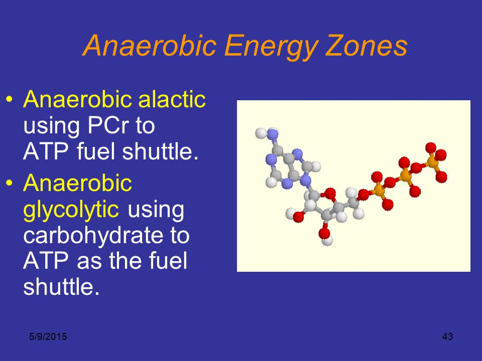 5/9/201543 Anaerobic Energy Zones Anaerobic alactic using PCr to ATP fuel shuttle. Anaerobic glycolytic using carbohydrate to ATP as the fuel shuttle.