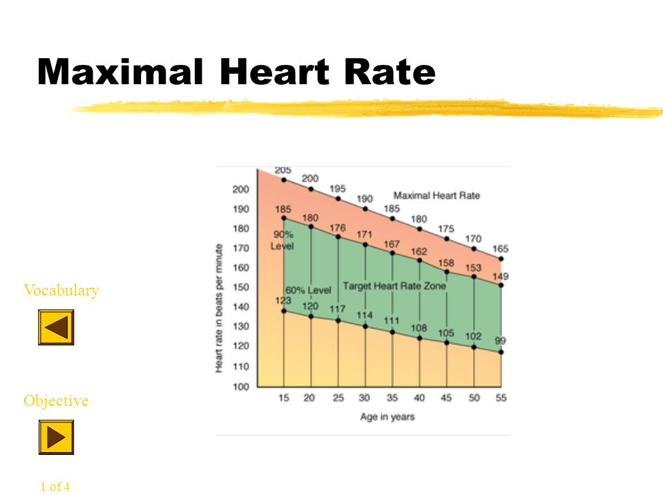 Maximal Heart Rate Vocabulary Objective 1 of 4