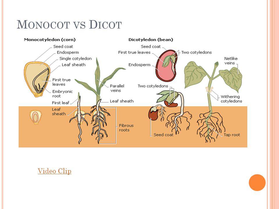 M ONOCOT VS D ICOT Video Clip
