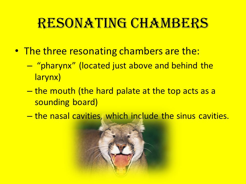 Resonating Chambers The three resonating chambers are the: – pharynx (located just above and behind the larynx) – the mouth (the hard palate at the top acts as a sounding board) – the nasal cavities, which include the sinus cavities.