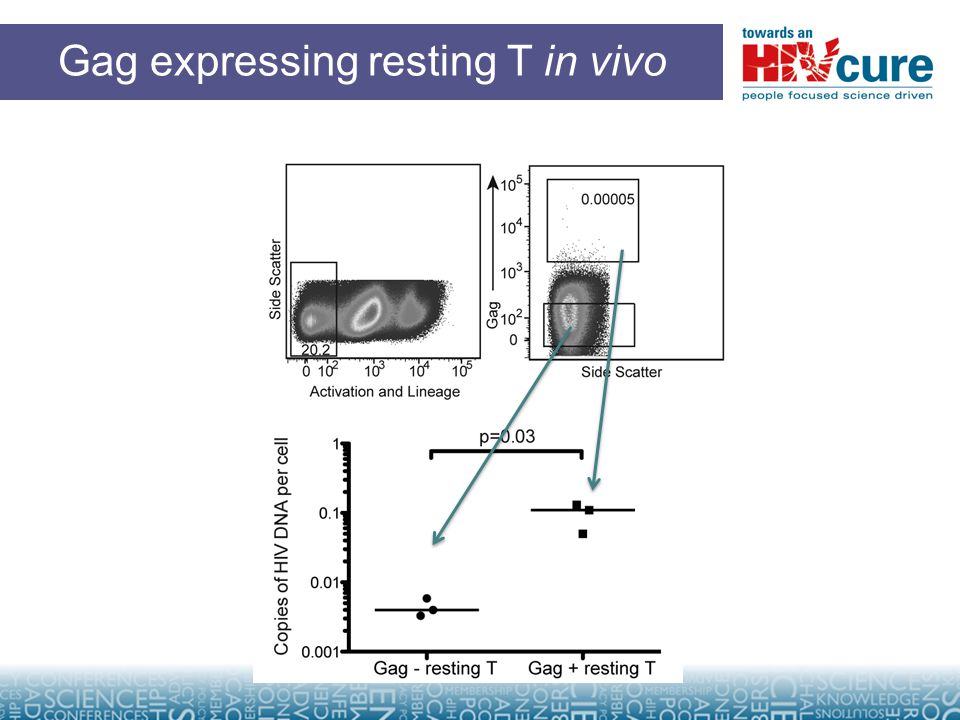 Gag expressing resting T in vivo