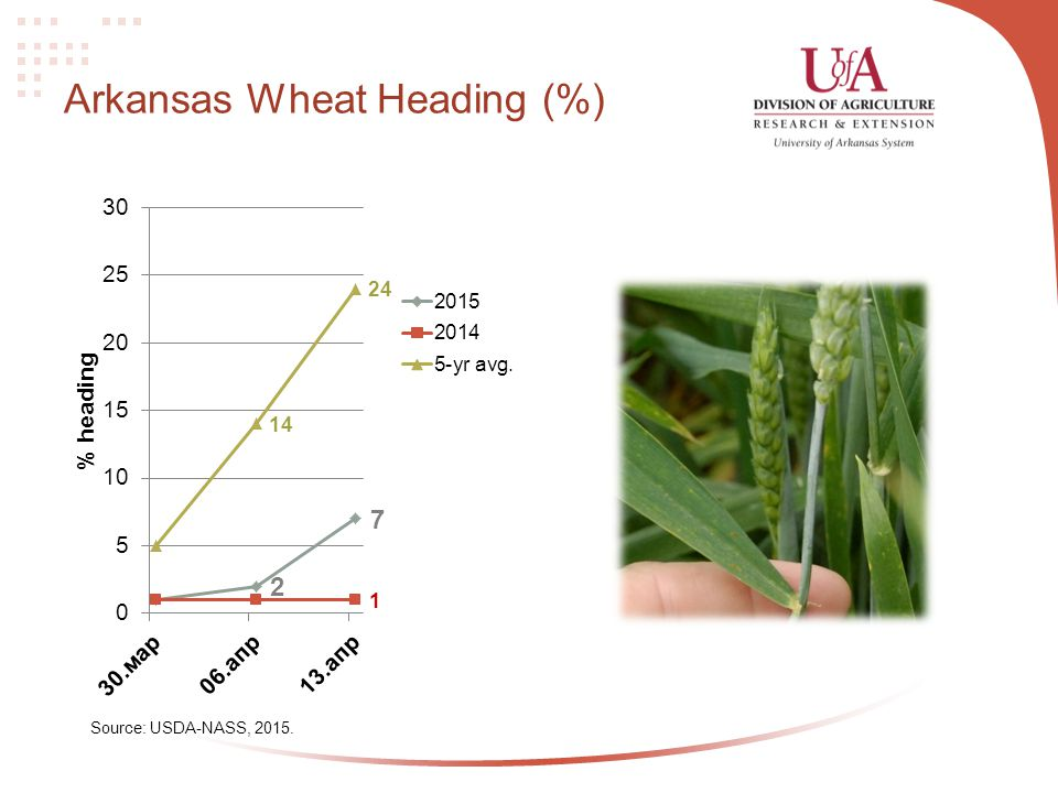 Arkansas Wheat Heading (%) Source: USDA-NASS, 2015.