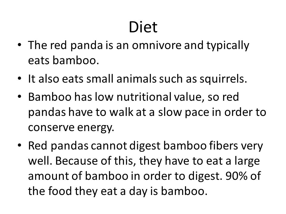 Diet The red panda is an omnivore and typically eats bamboo.