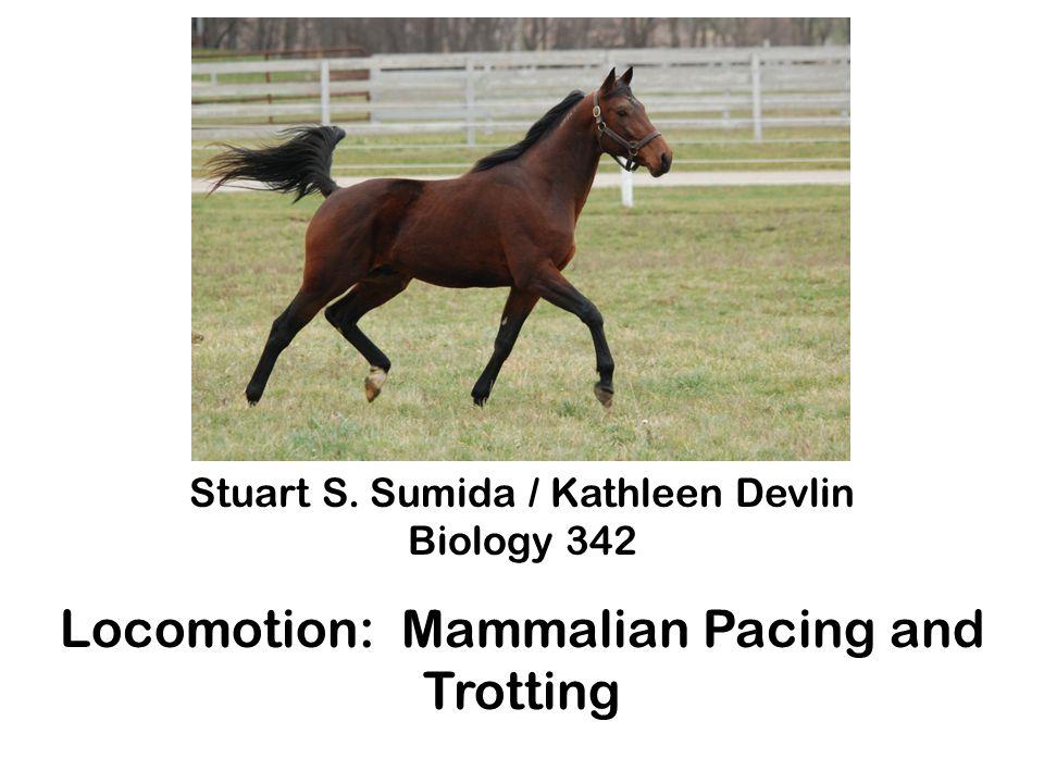 Stuart S. Sumida / Kathleen Devlin Biology 342 Locomotion: Mammalian Pacing and Trotting