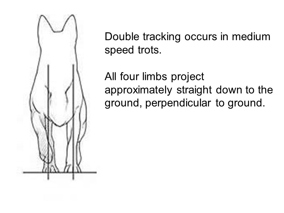 Double tracking occurs in medium speed trots.