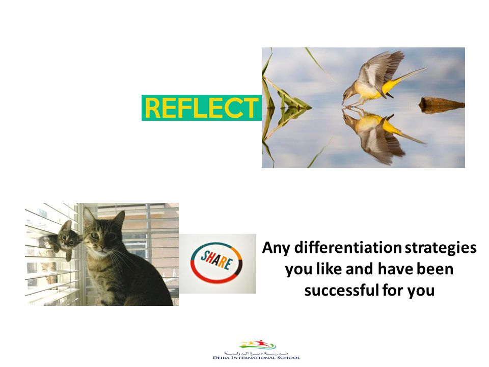 32 Any differentiation strategies you like and have been successful for you