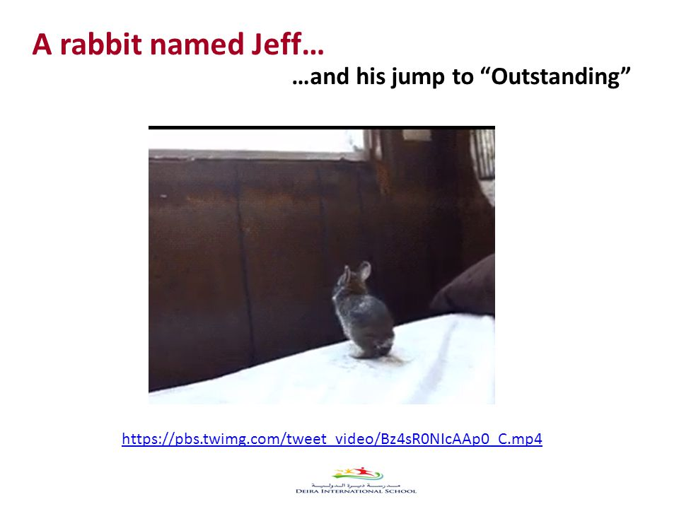 A rabbit named Jeff… …and his jump to Outstanding https://pbs.twimg.com/tweet_video/Bz4sR0NIcAAp0_C.mp4