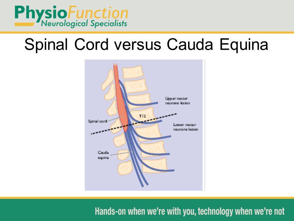 Spinal Cord versus Cauda Equina