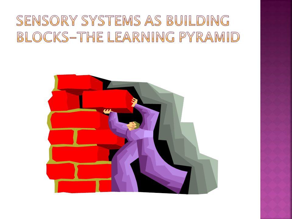 Sensory/motor/perceptual development occurs in the brain