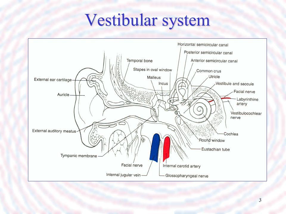3 Vestibular system