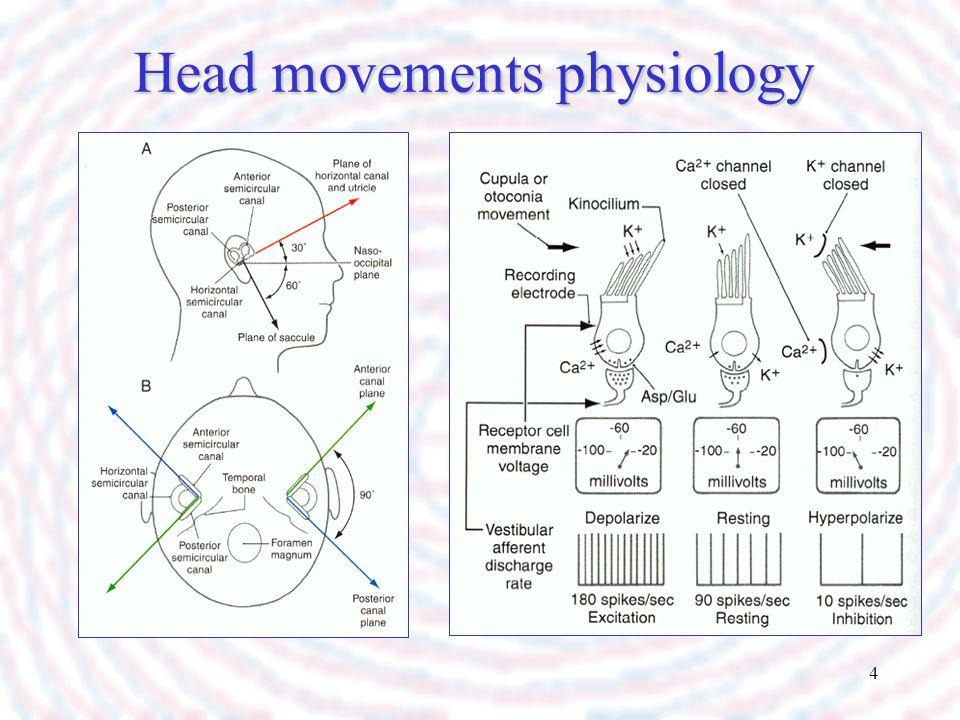 4 Head movements physiology