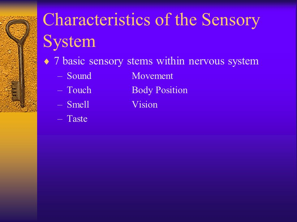 Characteristics of the Sensory System  7 basic sensory stems within nervous system –SoundMovement –TouchBody Position –SmellVision –Taste
