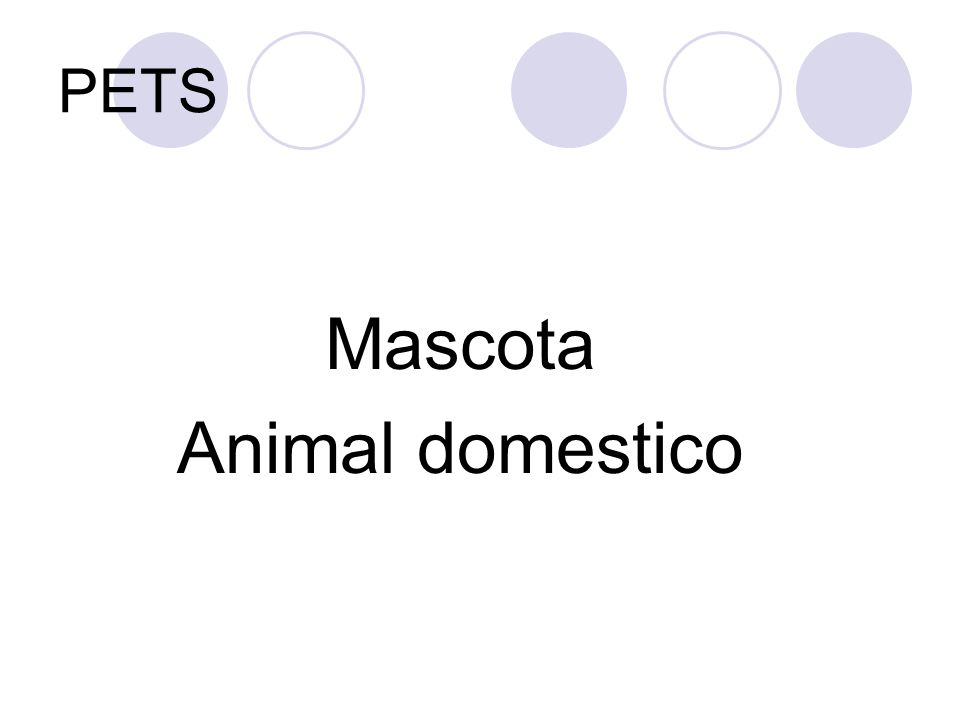 PETS Mascota Animal domestico