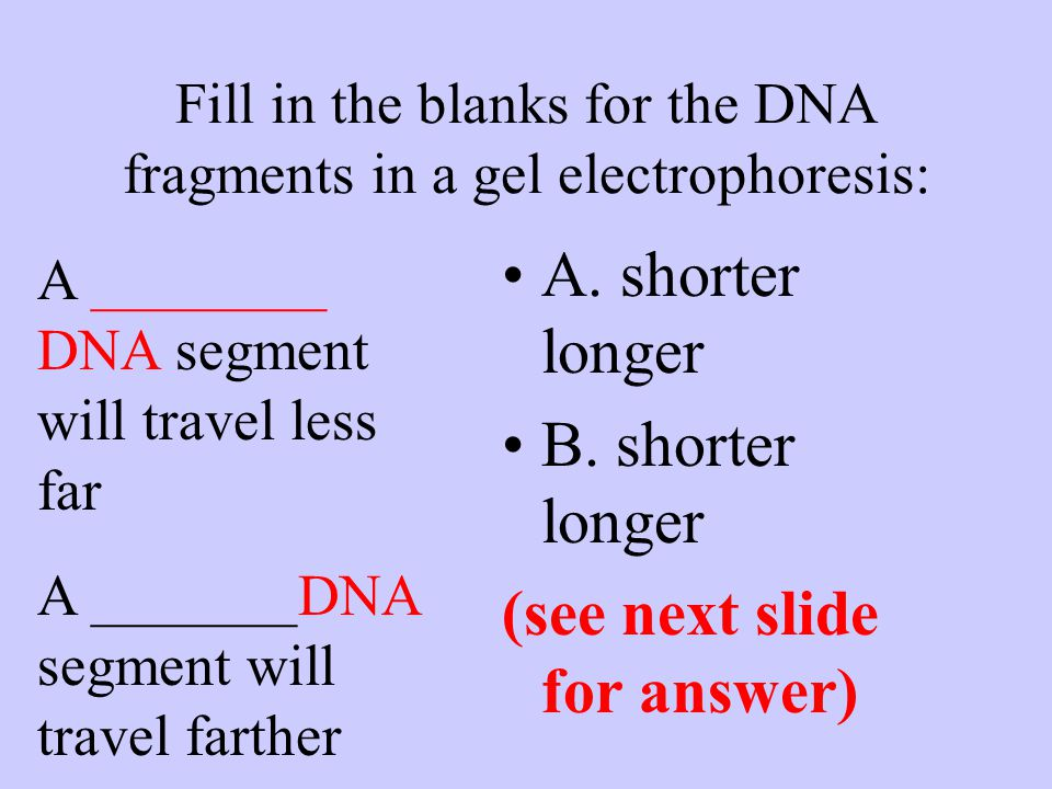 Fill in the blanks for the DNA fragments in a gel electrophoresis: A ________ DNA segment will travel less far A _______DNA segment will travel farther A.