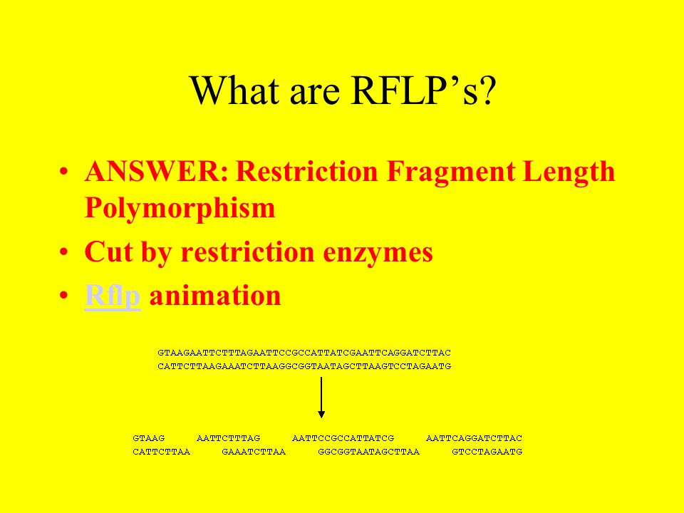 What are RFLP's? ANSWER: Restriction Fragment Length Polymorphism Cut by restriction enzymes Rflp animationRflp