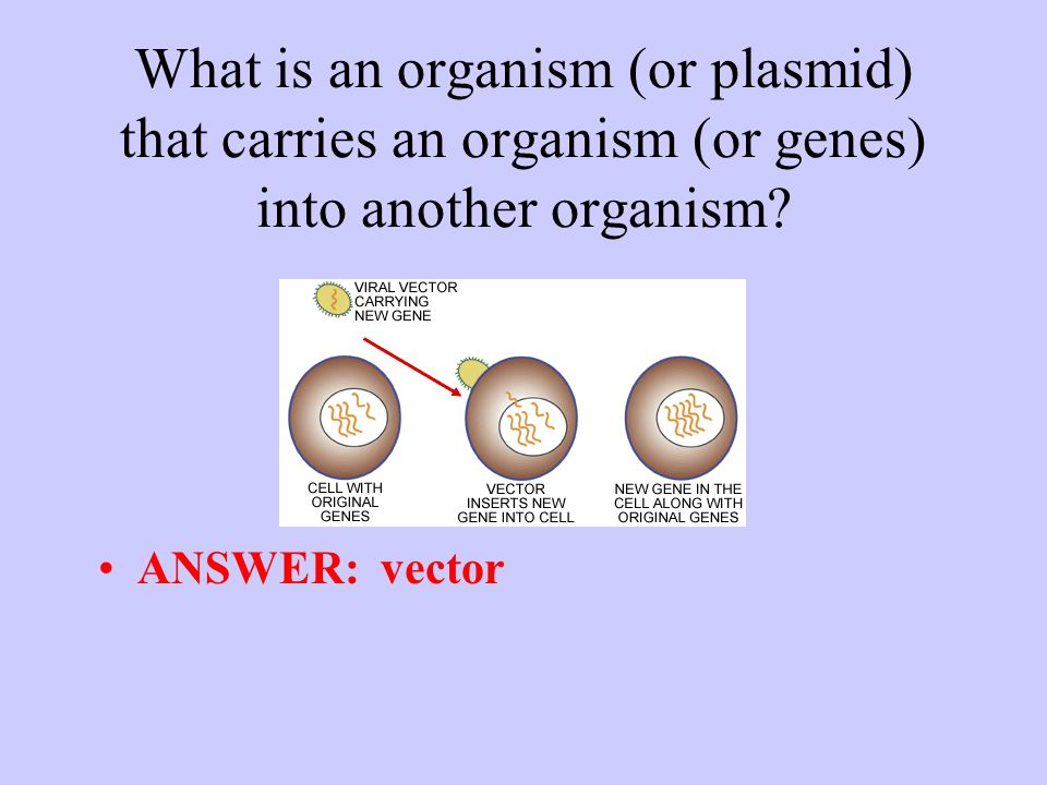What is an organism (or plasmid) that carries an organism (or genes) into another organism.