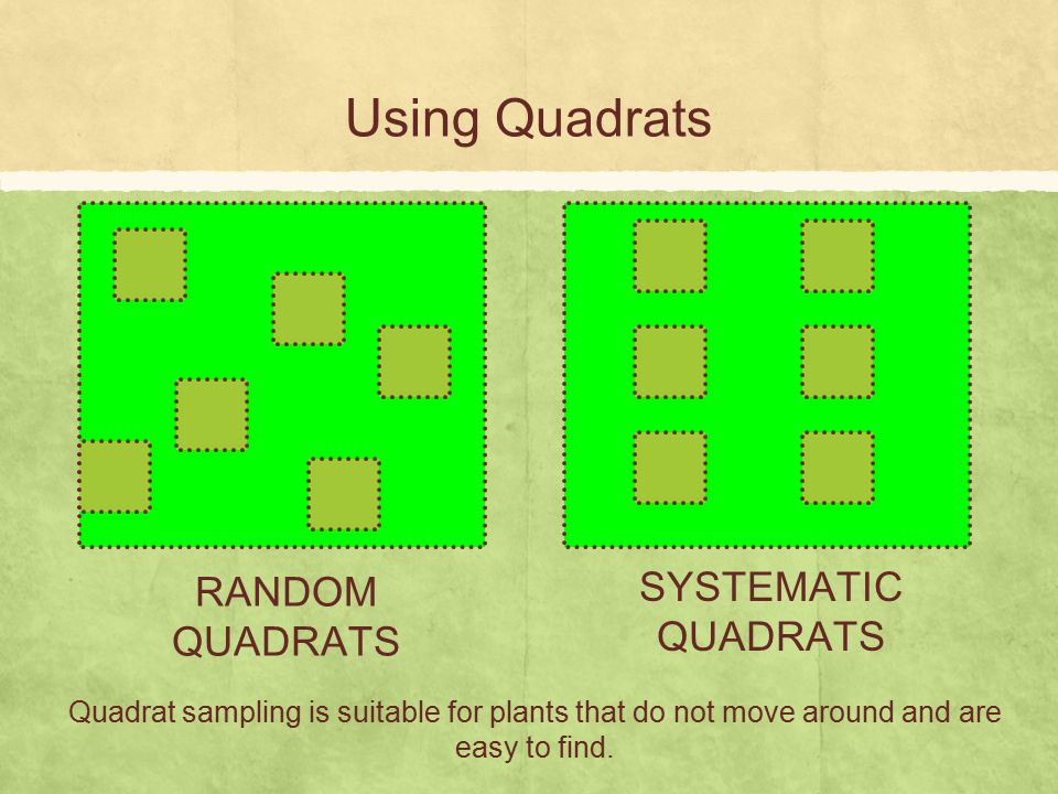 Using Quadrats RANDOM QUADRATS SYSTEMATIC QUADRATS Quadrat sampling is suitable for plants that do not move around and are easy to find.