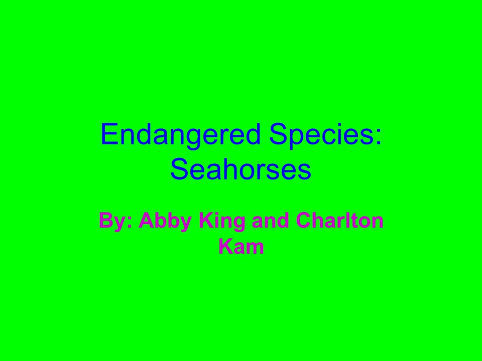Endangered Species: Seahorses By: Abby King and Charlton Kam