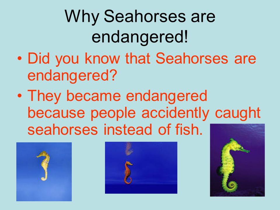 Why Seahorses are endangered.Did you know that Seahorses are endangered.