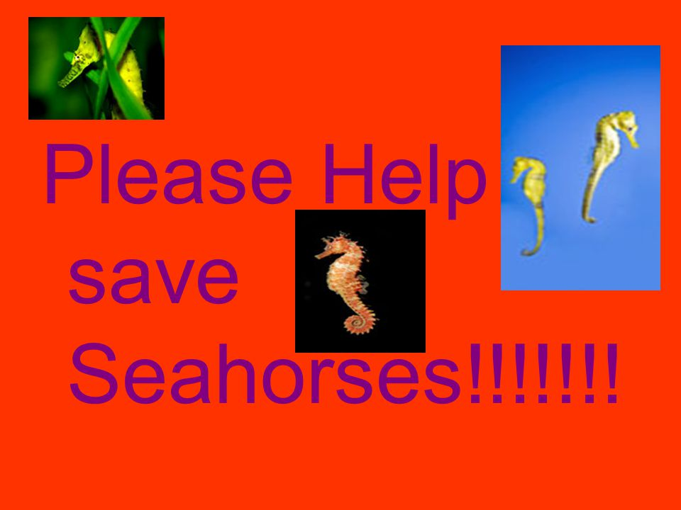 Please Help save Seahorses!!!!!!!