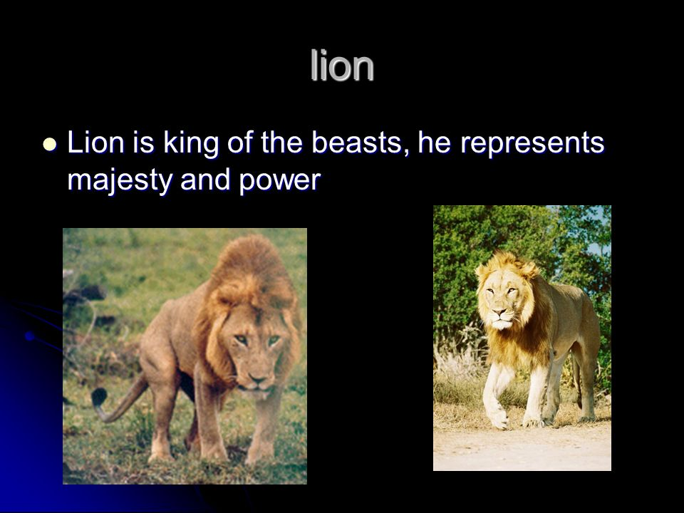lion Lion is king of the beasts, he represents majesty and power Lion is king of the beasts, he represents majesty and power