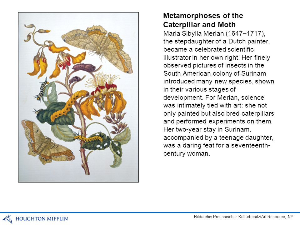 Maria Sibylla Merian (1647–1717), the stepdaughter of a Dutch painter, became a celebrated scientific illustrator in her own right.