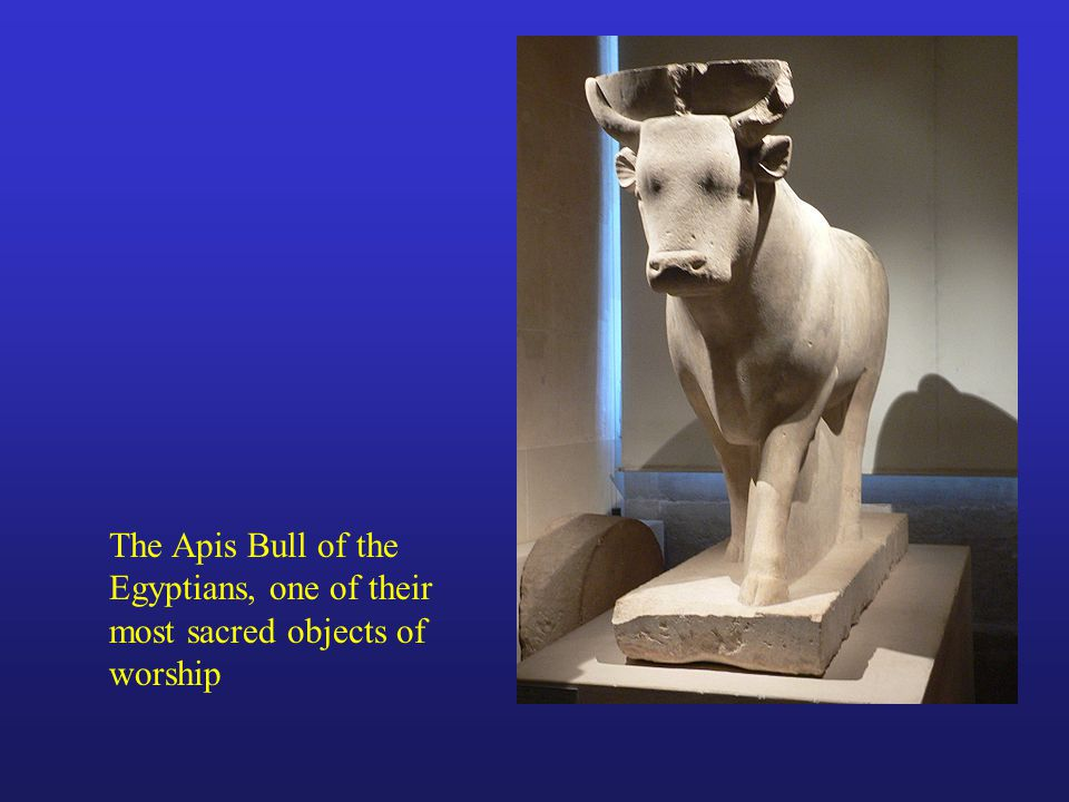 The Apis Bull of the Egyptians, one of their most sacred objects of worship