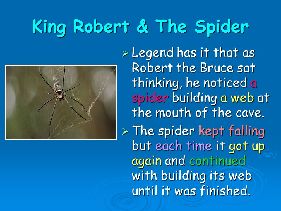 King Robert & The Spider  Legend has it that as Robert the Bruce sat thinking, he noticed a spider building a web at the mouth of the cave.