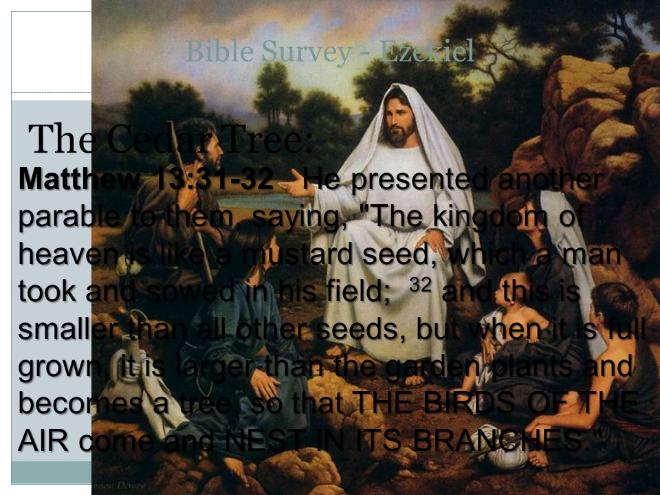 Bible Survey - Ezekiel The Cedar Tree: Matthew 13:31-32 He presented another parable to them, saying, The kingdom of heaven is like a mustard seed, which a man took and sowed in his field; 32 and this is smaller than all other seeds, but when it is full grown, it is larger than the garden plants and becomes a tree, so that THE BIRDS OF THE AIR come and NEST IN ITS BRANCHES.