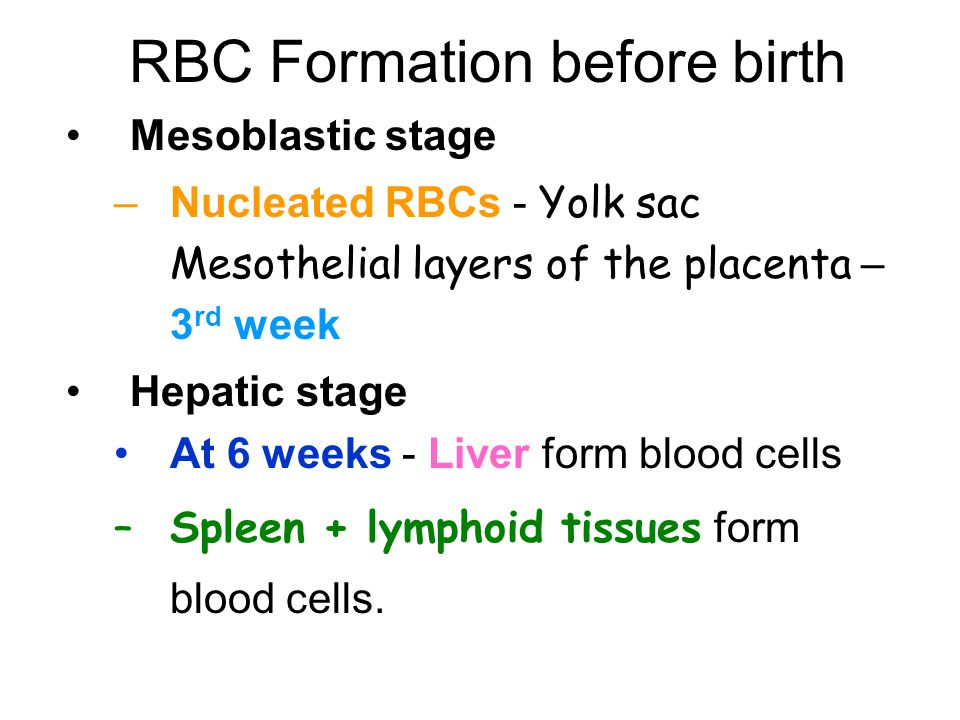 RBC Formation before birth Mesoblastic stage –Nucleated RBCs - Yolk sac Mesothelial layers of the placenta – 3 rd week Hepatic stage At 6 weeks - Liver form blood cells –Spleen + lymphoid tissues form blood cells.
