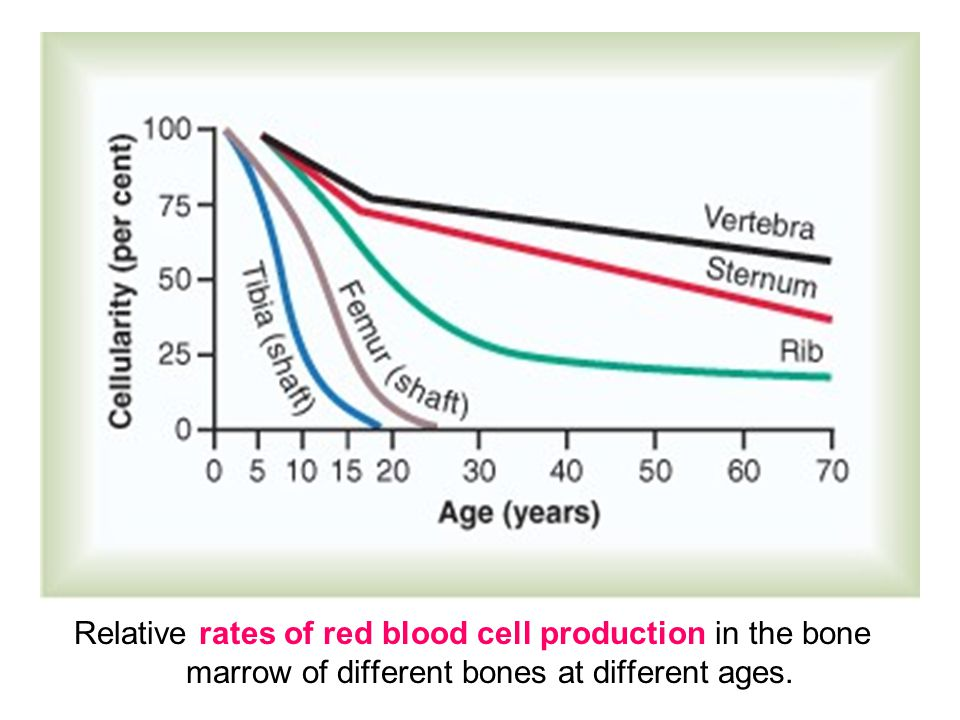 Relative rates of red blood cell production in the bone marrow of different bones at different ages.