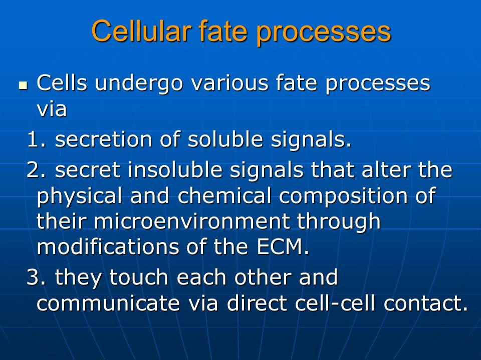 Cellular fate processes Cells undergo various fate processes via Cells undergo various fate processes via 1. secretion of soluble signals. 1. secretio