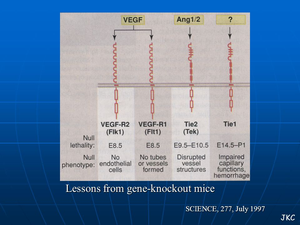SCIENCE, 277, July 1997 Lessons from gene-knockout mice JKC