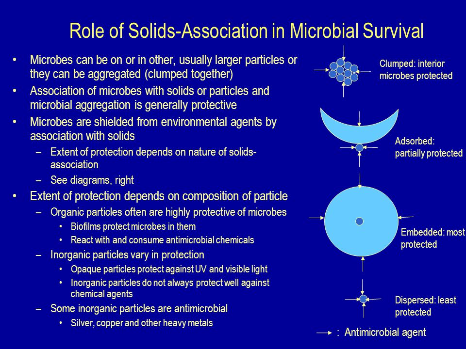 Role of Solids-Association in Microbial Survival Microbes can be on or in other, usually larger particles or they can be aggregated (clumped together) Association of microbes with solids or particles and microbial aggregation is generally protective Microbes are shielded from environmental agents by association with solids –Extent of protection depends on nature of solids- association –See diagrams, right Extent of protection depends on composition of particle –Organic particles often are highly protective of microbes Biofilms protect microbes in them React with and consume antimicrobial chemicals –Inorganic particles vary in protection Opaque particles protect against UV and visible light Inorganic particles do not always protect well against chemical agents –Some inorganic particles are antimicrobial Silver, copper and other heavy metals Dispersed: least protected Embedded: most protected Adsorbed: partially protected Clumped: interior microbes protected : Antimicrobial agent