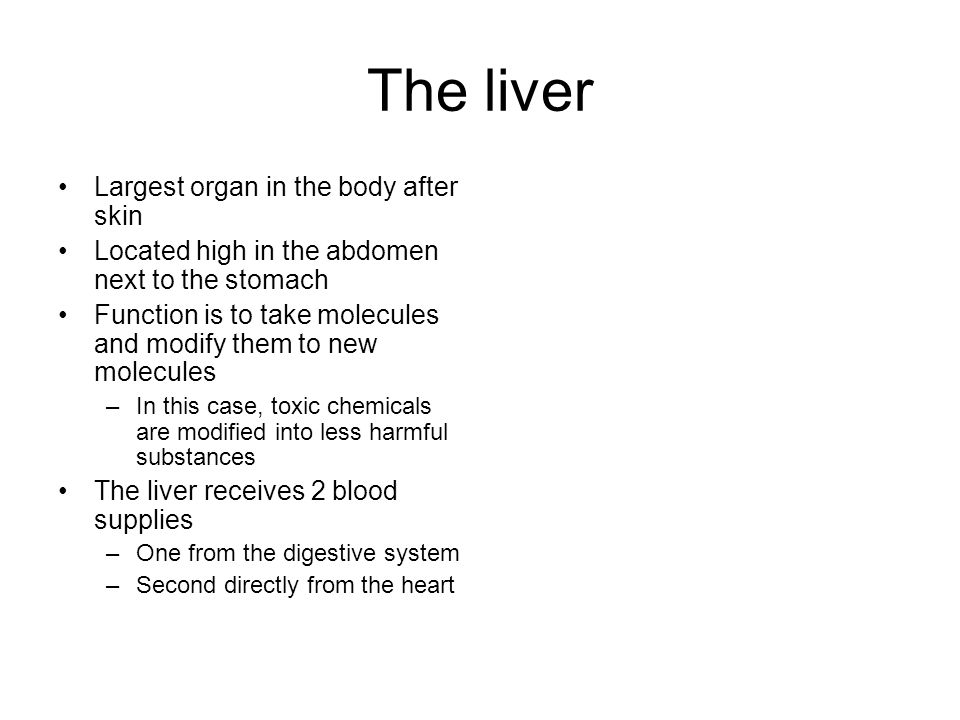 The liver Largest organ in the body after skin Located high in the abdomen next to the stomach Function is to take molecules and modify them to new molecules –In this case, toxic chemicals are modified into less harmful substances The liver receives 2 blood supplies –One from the digestive system –Second directly from the heart