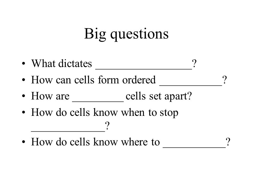 Big questions What dictates _________________. How can cells form ordered ___________.
