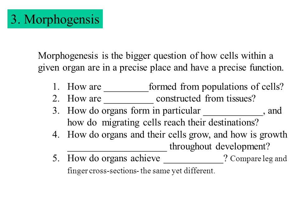 3. Morphogensis Morphogenesis is the bigger question of how cells within a given organ are in a precise place and have a precise function. 1.How are _