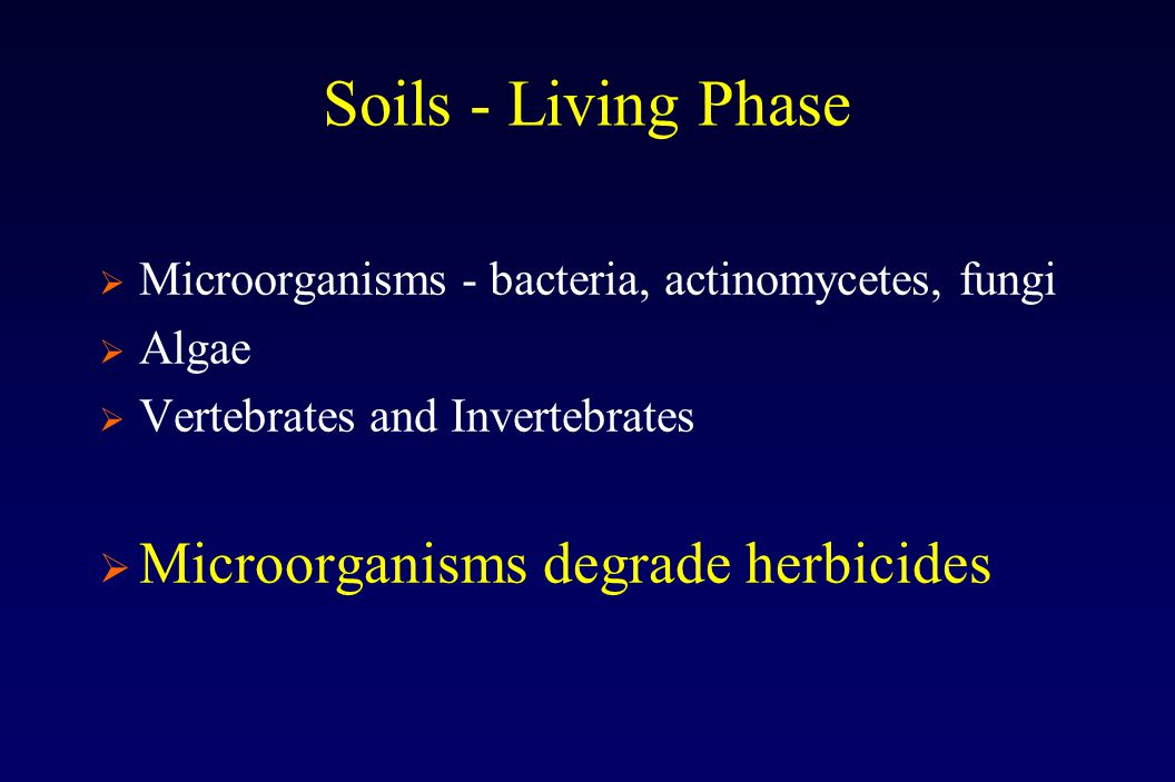 Soils - Living Phase  Microorganisms - bacteria, actinomycetes, fungi  Algae  Vertebrates and Invertebrates  Microorganisms degrade herbicides