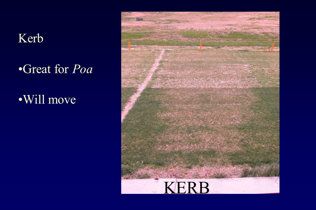 KERB Kerb Great for Poa Will move
