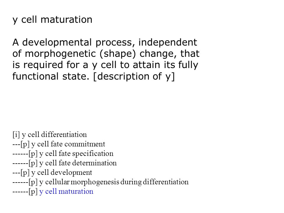 y cell maturation A developmental process, independent of morphogenetic (shape) change, that is required for a y cell to attain its fully functional state.