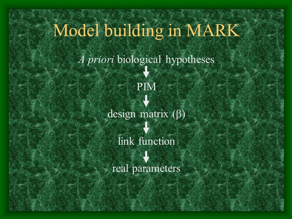 Model building in MARK A priori biological hypotheses PIM design matrix (β) link function real parameters