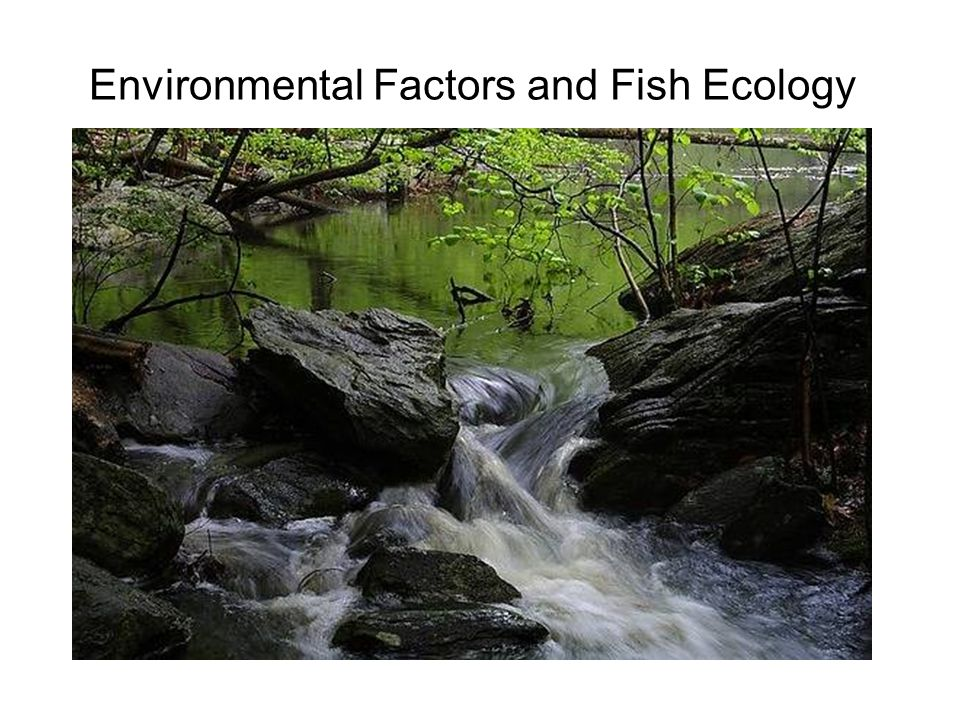 Environmental Factors and Fish Ecology