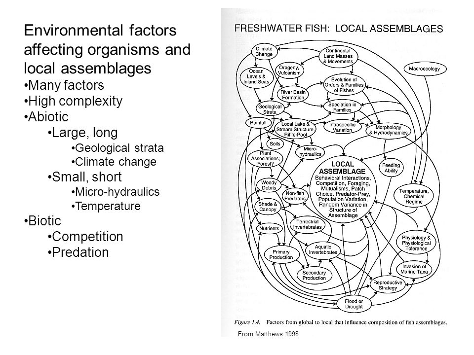 Environmental factors affecting organisms and local assemblages Many factors High complexity Abiotic Large, long Geological strata Climate change Small, short Micro-hydraulics Temperature Biotic Competition Predation From Matthews 1998