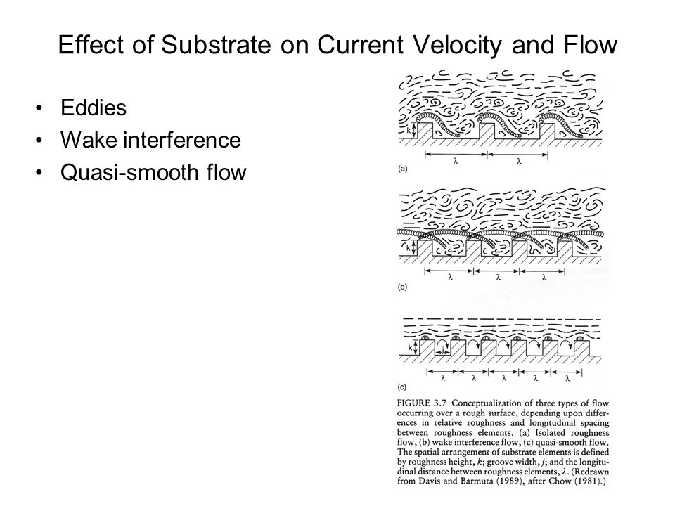 Longitudinal pattern in streams Rivers generally increase in size as one proceeds downstream –Velocity (U) varies with gradient, depth, and substrate texture Average velocity usually increases downstream.