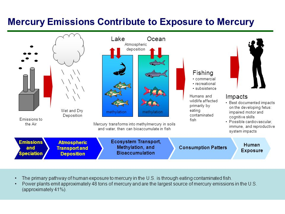 Mercury Emissions Contribute to Exposure to Mercury The primary pathway of human exposure to mercury in the U.S.