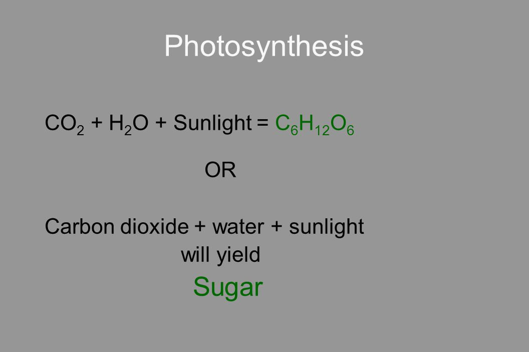 Photosynthesis CO 2 + H 2 O + Sunlight = C 6 H 12 O 6 OR Carbon dioxide + water + sunlight will yield Sugar